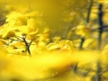 Mellow Yellow 2